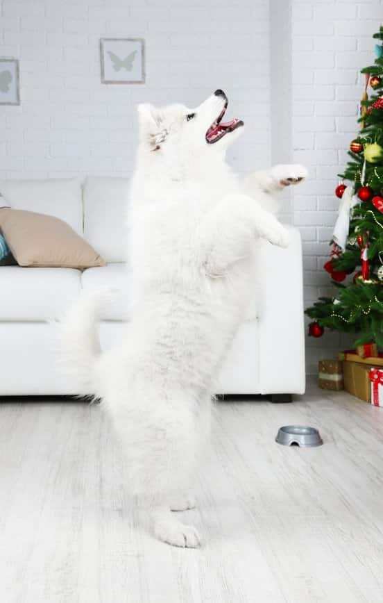 Les 15 plus beaux chiens du monde