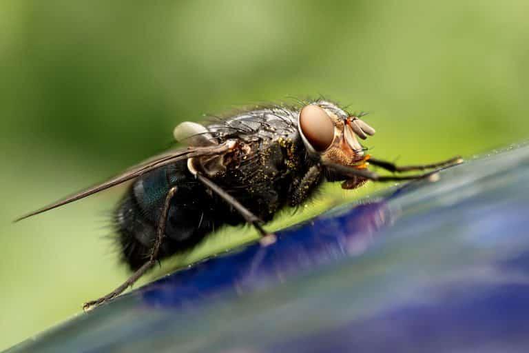 Comment se débarrasser des moucherons?